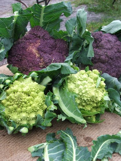 Romanesco and Violetta cauliflowers
