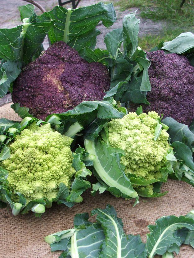 Romanesco and Violetta cauliflowers