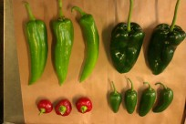 Anahiem, poblano, jalapeno, cherry chillies