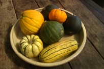 Mini pumpkins - golden nugget, Jack-be-little, delicata, acorn, honey bear