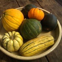 Mini pumpkins - golden nugget, Jack-be-little, delicata, acorn, honey bear