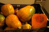Argentine pumpkin