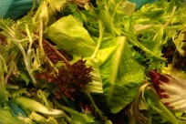 Bitter green salad