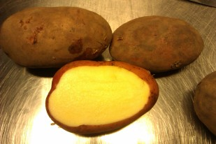 Rodeo potato