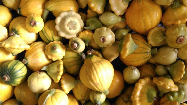 Golden nugget and patty pan squash.